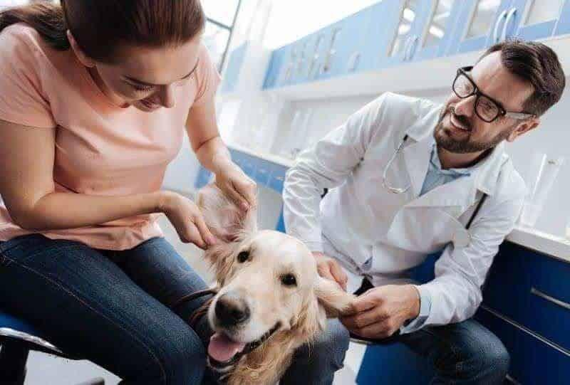 Veterinary Answering Service Customization