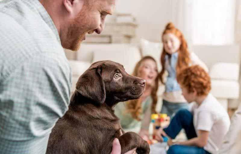 How Our Veterinary Answering Service Works